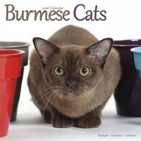 Cats - Burmese Wall Calendar 2016