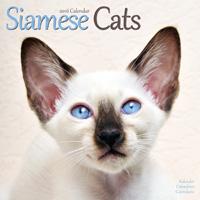 Cats - Siamese Wall Calendar 2016