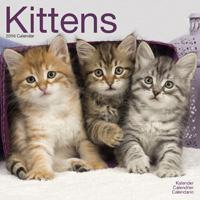 Kittens Wall Calendar 2016