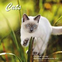 Cats Wall Calendar 2016