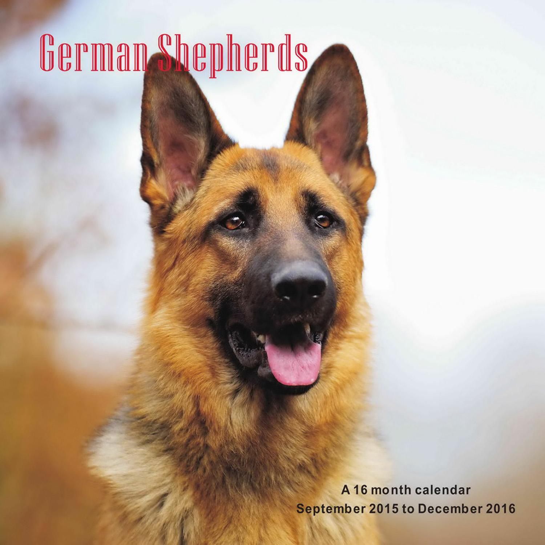 Large German Dog Crossword