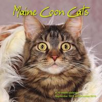 Maine Coon Cats Wall Calendar 2016