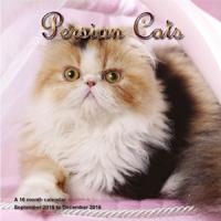 Persian Cats Wall Calendar 2016