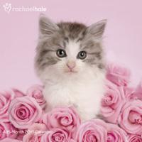 Rachael Hale Cats Wall Calendar 2016