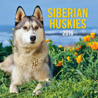 Siberian Huskies Wall Calendar 2016