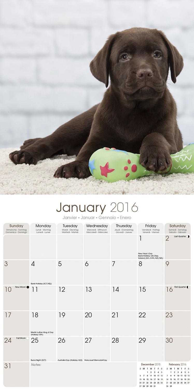 Calendar Labs : Chocolate lab retriever calendar pet prints inc