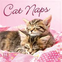 Cat Naps Wall Calendar 2016