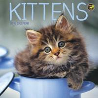 Kittens Mini Wall Calendar 2016