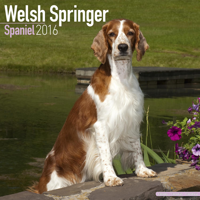 Welsh Springer Spaniel Calendar 2016 | Pet Prints Inc.